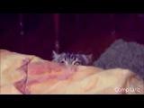 Эти коты взорвали весь интернет, ужасно смешно))