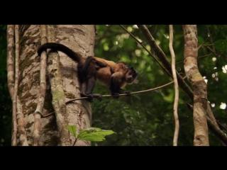 Амазония: Инструкция по выживанию / Amazonia (2013) BDRip [vk.com/Feokino]