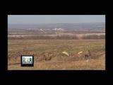 США. Псаки несмогла предоставить доказательств присутствия Российских войск на Украине
